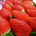 マツコ絶賛のいちご「真紅の美鈴」と「いばらキッス」をお取り寄せ!