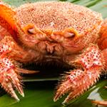 黄金毛蟹をお取り寄せ!北海道のカニと言えばまずこれを食え!