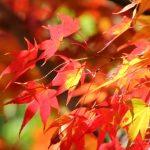 2016年北海道人気紅葉スポット&名所の見頃まとめ