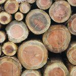 ウッドバーニングが面白そう!木製品のまち旭川の新たな楽しみに!?