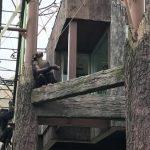 車で行く旭山動物園(あさひやまどうぶつえん)への道☆混雑時の裏ルートも教えます!