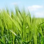 産業としての農業は成り立たないってこと?