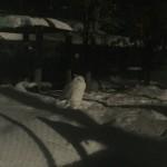 雪あかりの旭山動物園で夜の動物たちの生態を探れ!期間限定の超おススメイベント!